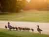 0005_Pymble_Golf_Par_3s_Nov_2015