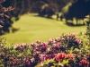 0010_pymble_golf_27thsept_2013
